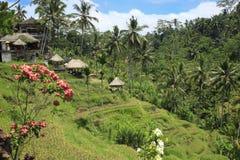 Tarasowaci Ryżowego irlandczyka pola Bali Indonezja i kwiaty Obraz Stock
