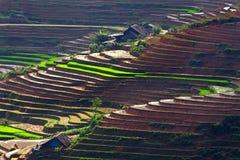 Tarasowaci ryżowi pola Zdjęcia Royalty Free