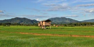 Tarasowaci ryż pola. Fotografia Royalty Free