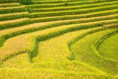 Tarasowaci ryż pola Zdjęcia Royalty Free