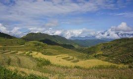 Tarasowata dolina na żniwo sezonie Zdjęcie Royalty Free