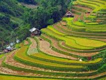 Tarasowaty Rice pole, Mu Cang Chai Wietnam Zdjęcie Stock
