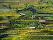 Tarasowaty Rice pole, Mu Cang Chai Wietnam Zdjęcia Stock
