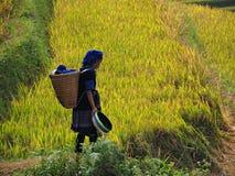 Tarasowaty Rice pole, Mu Cang Chai Wietnam Obrazy Stock