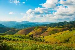 Tarasowaty Rice pole w Chiangmai, Tajlandia Zdjęcia Stock