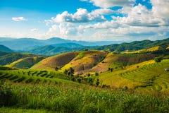 Tarasowaty Rice pole w Chiangmai, Tajlandia Fotografia Royalty Free