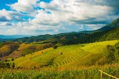 Tarasowaty Rice pole w Chiangmai, Tajlandia zdjęcie royalty free