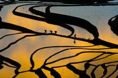 Tarasowaty ryżu pole (Yuanyang Hani) zdjęcia royalty free