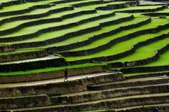 Tarasowaty ryżu pole w Mu Cang Chai, Wietnam Obrazy Royalty Free