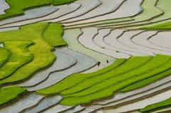 Tarasowaty ryżu pole w Mu Cang Chai, Wietnam Fotografia Stock