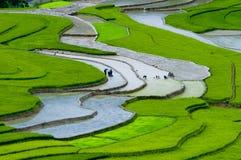 Tarasowaty ryżu pole w Mu Cang Chai, Wietnam Obraz Royalty Free