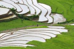 Tarasowaty ryżu pole w Mu Cang Chai, Wietnam Obrazy Stock