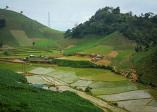 Tarasowaty ryżu pole w wodnym sezonie w Mocy Chau Obrazy Royalty Free
