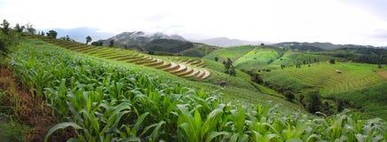 Tarasowi ryż pola Zdjęcia Stock