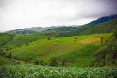Tarasowi ryż pola Zdjęcie Royalty Free