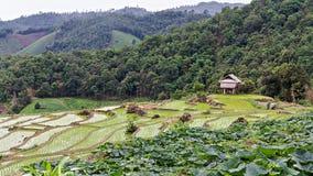 Tarasowi ryż pola w Chiang mai, Tajlandia Fotografia Royalty Free