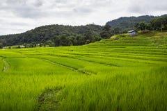 Tarasowy ryżu pole nad górą Obrazy Stock