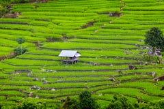 Tarasowy ryżu pole nad górą Zdjęcia Royalty Free