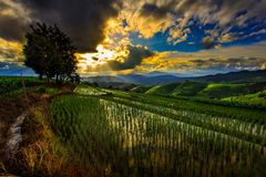 Tarasowy ryżu pole nad górą Obraz Royalty Free