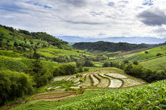 Tarasowy ryżu pole nad górą Fotografia Stock