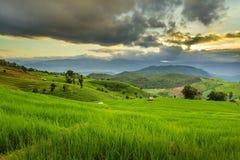Tarasowy ryżu pole nad górą Obraz Stock