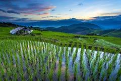 Tarasowy ryżu pole nad górą Fotografia Royalty Free