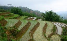 Tarasowy ryżu pole przy iryguje sezon obraz royalty free