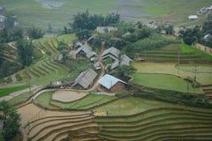Tarasowy ryżu pole przy iryguje sezon w Sapa obrazy stock
