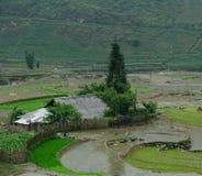 Tarasowy ryżu pole przy iryguje sezon w Sapa obraz royalty free