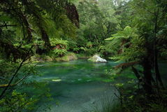 Tarawera River. New Zealand Royalty Free Stock Images