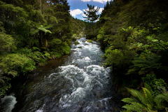 Tarawera River, New Zealand Stock Photos