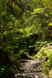 Tarawera River Walk, New Zealand Stock Photo
