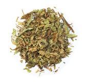 Taraxacum mongolicum. Pu Gong Ying. Herba Taraxaci, chinese herbal medicine isolated. Pu Gong Ying Royalty Free Stock Photos