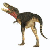 Tarbosaurus恐龙尾巴 图库摄影