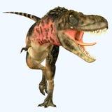 Tarbosaurus食肉动物恐龙 免版税库存图片