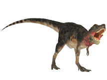 Tarbosaurus Stock Photos