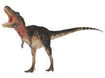 Tarbosaurus Stock Image