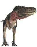 Tarbosaurus Royalty Free Stock Image