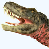 Tarbosaurus Dinosaur Head Royalty Free Stock Photo