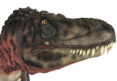 Tarbosaurus head. The dinosaur tarbosaurus is a cgi genareted  very useful for any illustration Royalty Free Stock Images
