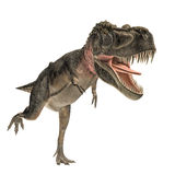 Tarbosaurus Stock Photography
