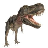 Tarbosaurus Stock Images
