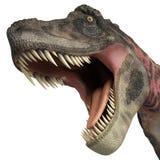 Tarbosaurus stor tugga Arkivfoton