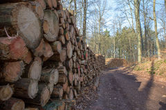 Tarcica w lesie Obraz Stock