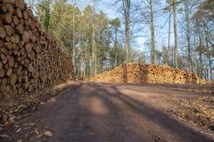 Tarcica w lesie Zdjęcia Stock