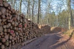 Tarcica w lesie Obraz Royalty Free