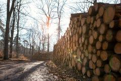 Tarcica w lesie Obrazy Royalty Free