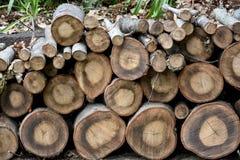 Tarcicy drewno Zdjęcie Stock