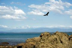 Tarcoles by - Costa Rica royaltyfri foto