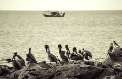 Tarcoles village - Costa Rica. Tarcoles village, pelicans in the water during the sunset - Puntarenas, Costa Rica Stock Images